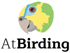 Amazona Tropical Birding