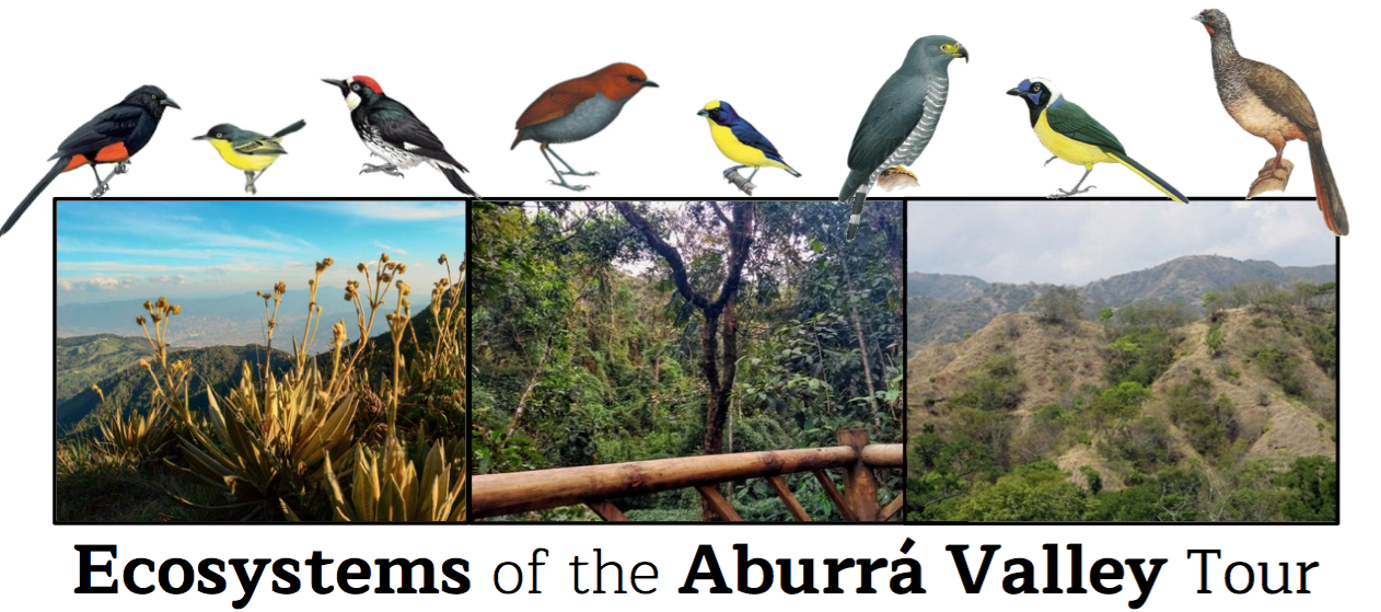 Ecosystems of the Aburra Valley