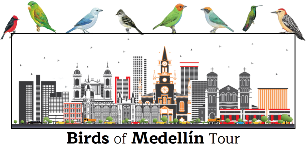 Birds of Medellin